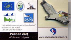 Romania Dalmatian Pelican