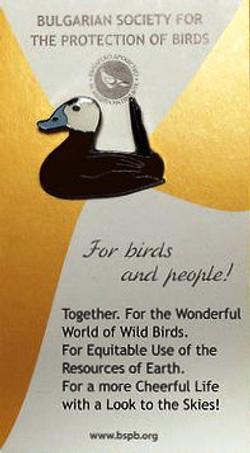BSPB-White-Headed-Duck