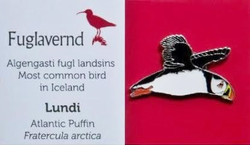 Iceland - Puffin