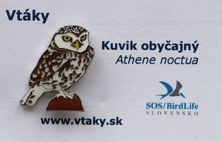 SOS Little Owl