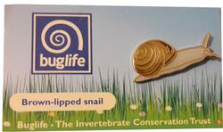 Brown-Lipped Snail