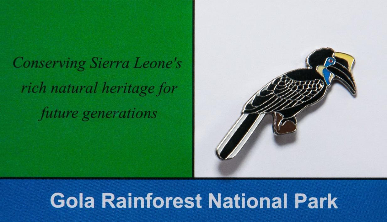 Sierra Leone Pied Hornbill_edited