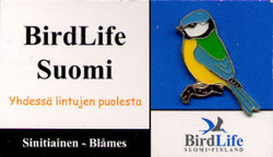 Finland Birdlife Suomi Blue Tit