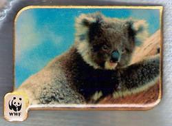 AU KOALA BEAR