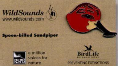 WildSounds - Spoon-billed Sandpiper (2)_edited