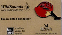 WildSounds - Spoon-billed Sandpiper (2)_edited