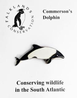 Falklands Dolphin