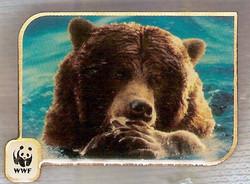 AU GRIZZLY BEAR