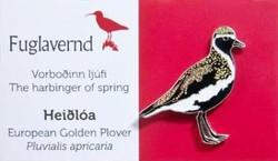 Iceland - Golden Plover
