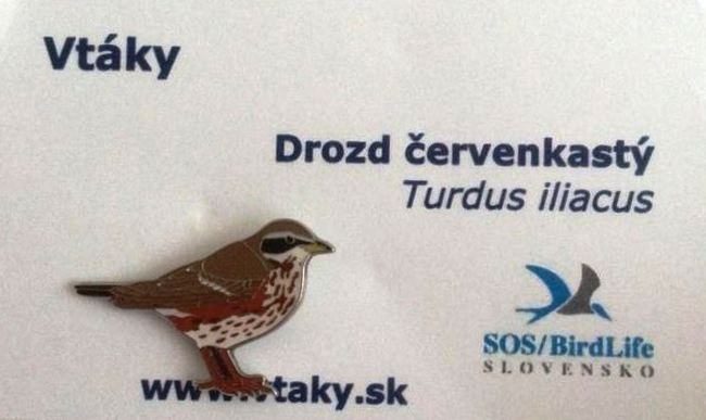Slovakia Redwing