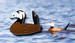 Kazakhstan White Headed Duck