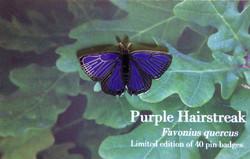 Hairstreak Butterfly - Male
