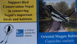 BCN -Oriental Magpir Pin Badge