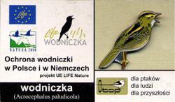 Poland - Aquatic Warbler
