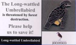Ecuador Umbrellabird