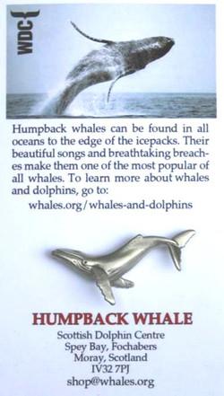 WDC humpback