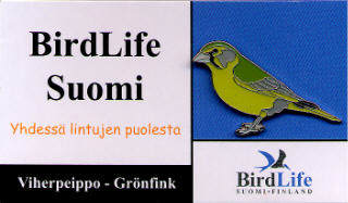 Finland Birdlife Suomi Greenfinch