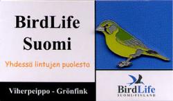Finland Birdlife Suomi Greenfinch
