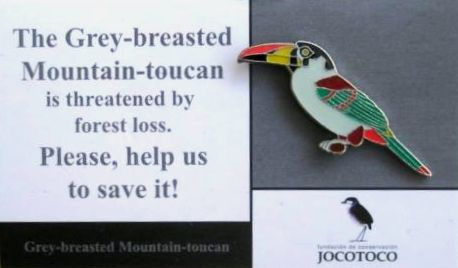JOCOTOCO GREY-BREASED MOUNTAIN TOUCAN