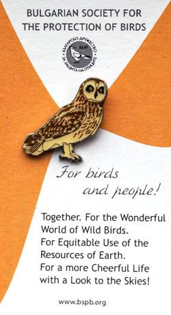 BSPB Short eared Owl