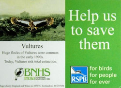 Save Vultures Small