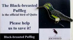 JOCOTOCO BLACK-BREASED PUFFLEG