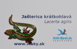Slovakia lizard