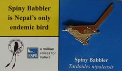 BCN -Spiny Babblet