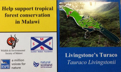 Malawi - Livingstones Turaco_edited
