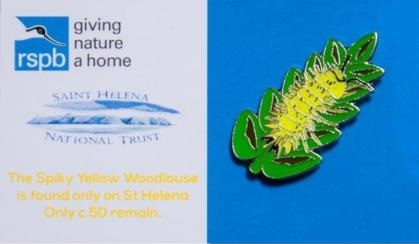 St. Helena Island - Spiky Yellow Woodlouse