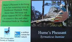 Humes Pheasant