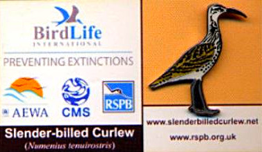 Birdlife - Slender Billed Curlew_edited