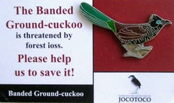 JOCOTOCO BANDED GROUND CUCKOO