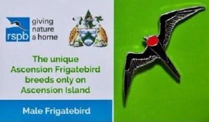 Ascension Island - Male Frigatebird