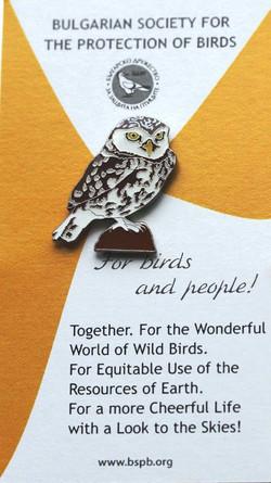 BSPB Little Owl