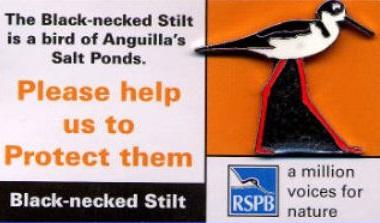Anguilla - Black-necked Stilt