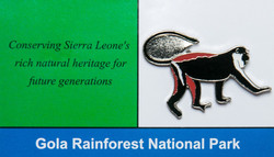 Sierra Leone Diane Monkey_edited
