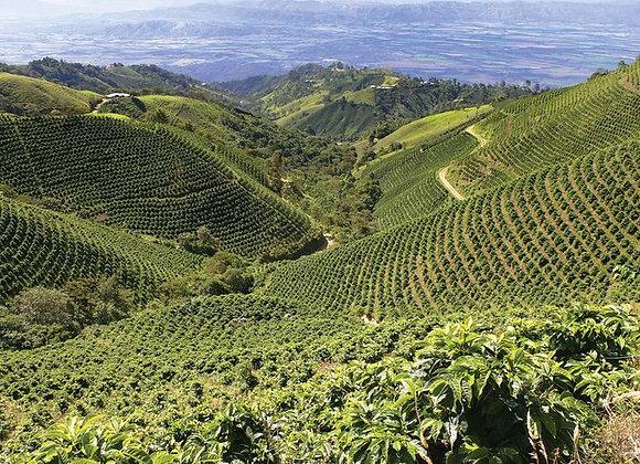 Columbian Organic