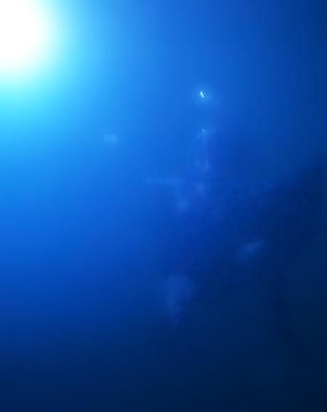Shark Attack Falling by Moonwake