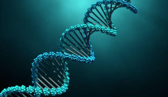 24 Strand DNA Activation
