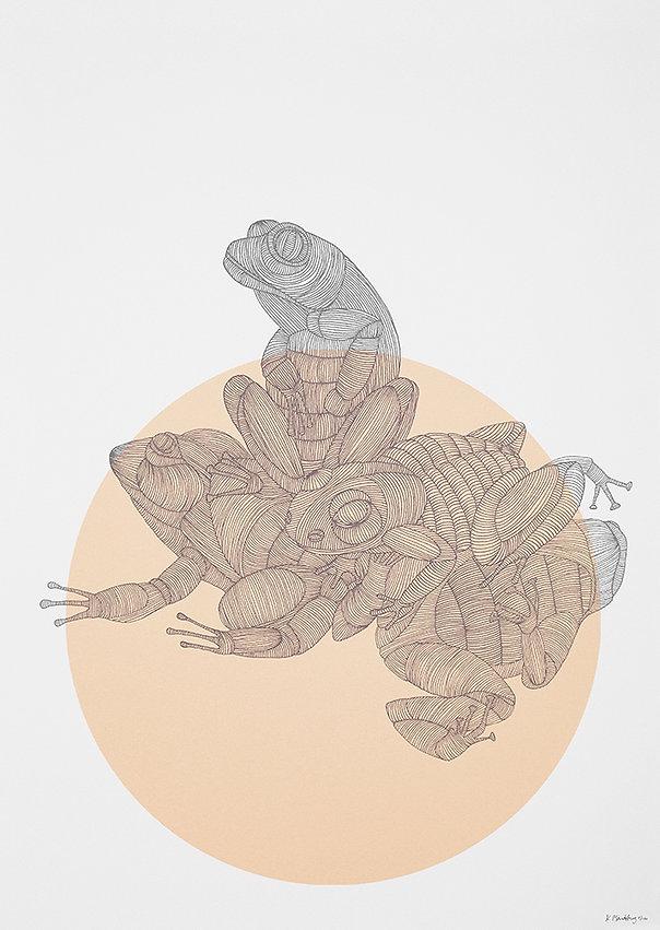 frogs_big.jpg