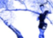 woods2_blue.jpg