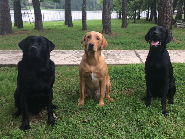 Khaos, Bear and Bohdi