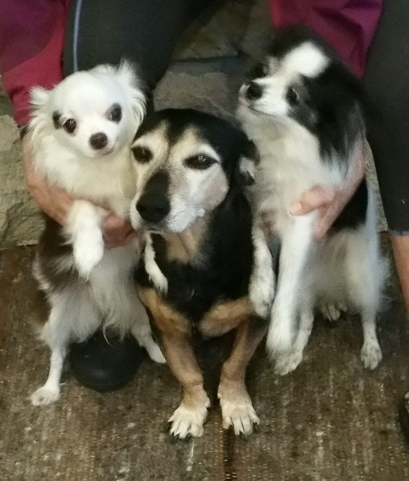 Lola, Zoey & Zsa Zsa