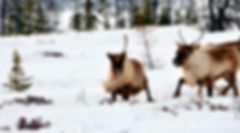 Зимний тур к оленеводам