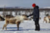 туры на полярный урал и к оленеводам