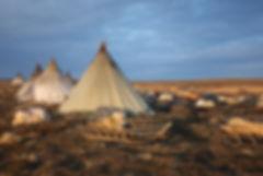Summer nomads nenets tour Yamal