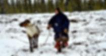 туры к оленеводам стойбища ямала