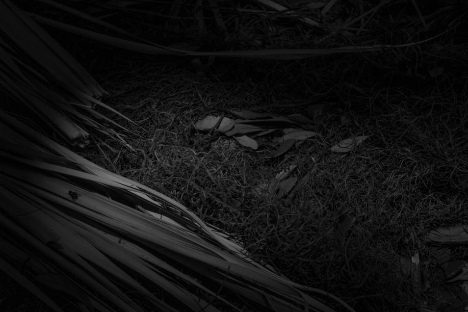 Enveloped In Darkness