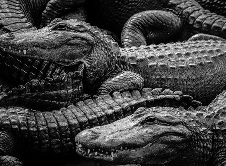 Alligator Farm Zoological Park